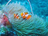 The Underwater Beauty Surrounding the Islands are Stunning