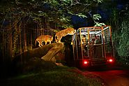 A Fabulous Night at the Bali Zoo
