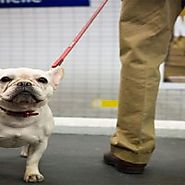 Dogs and cats can travel by metro in Buenos Aires