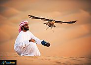 Know about the Emirati sports: Falconry in Abu Dhabi