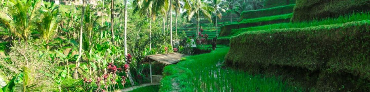 Headline for Top Things to do in Ubud – Cool Central Highlands of Bali
