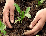 Check Out The Details About Agricultural Biopesticides India