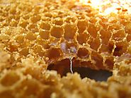 23 ways to save the world with beeswax - Nature Holds the Key
