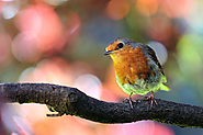 26 ways to attract birds to your garden - Nature Holds the Key
