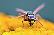 9 natural ways to get rid of wasps - Nature Holds the Key