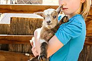 How to care for baby goats