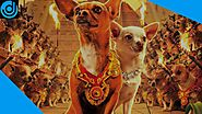 Top 10 Best Dog Movies Of All Time That Every Dog Lover Must Watch