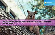 Affordable Wildlife Control Services Burlington