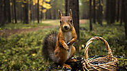 5 Effective Tips for Easy Squirrel Removal In Burlington