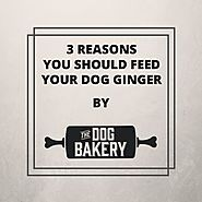 3 Reasons you Should Feed Your Dog Ginger – The Dog Bakery