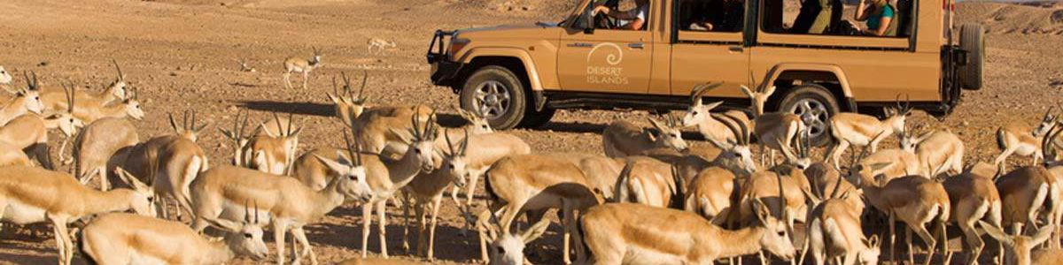 Headline for Animals on Sir Bani Yas – Into the Wild!