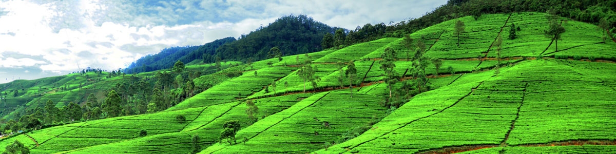 Headline for Top Attractions in Nuwara Eliya – Garden City of Sri Lanka