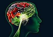 The Pharmacological Impacts of Memory Enhancing Supplements