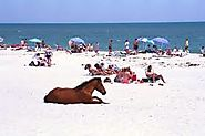 Assateague Island beach in Maryland is a natural beach with a lot of wildlife.