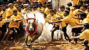 Jallikatu is our identity