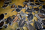 Get Involved with Turtle Conservation