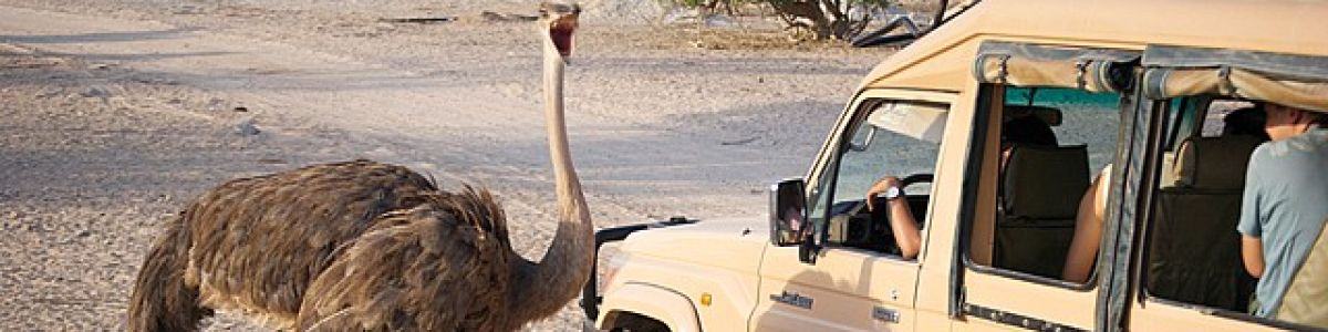 Headline for Top things to do in Sir Bani Yas Island – Enjoy Exotic Arabian Island Vibes