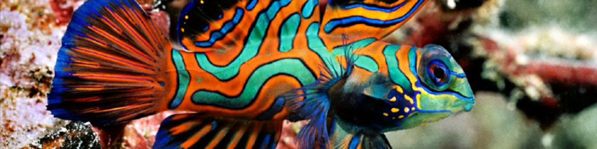 Headline for Pretty Sea Animals in Bali – Fascinating Critters of the Sea