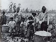 Slaves on plantation with cotton