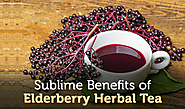 Sublime Benefits of Elderberry Herbal Tea that will amaze you
