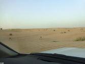 Evening Desert Safari - Your Dream Desert Safari Destinations