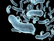 What is the gut microbiota? What is the human microbiome?