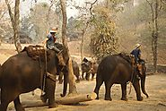 Visit an Elephant Camp