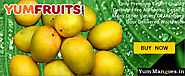 YumMangoes :: Order Buy Send Gift Kesar Alphonso Mangoes Online