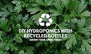 DIY Hydroponics from Recycled Bottles - Grow Your Own Food! - Red Dot Geek