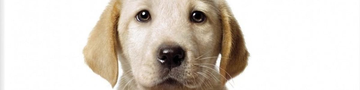 Headline for 10 Amazing Dog Movies Every Dog Lover Must Watch!