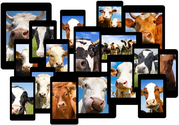 Get Ahead of the Mobile Herd: 5 Best Practices for Mobile-Optimized Marketing