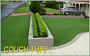 Facts About Wintergreen Couch Turf