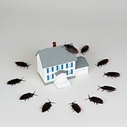 An Experienced Bed Bugs Specialist in Philadelphia, PA