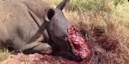 Stop Rhino Poaching in South Africa