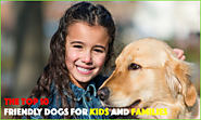 Top 10 Dogs which are Safe for your Kids