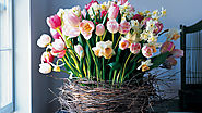 Birch-Wrapped Basket with Tulips and Daffodils