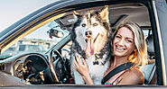 Safe ways to transport your dog in your car