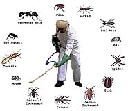 Selecting a Pest Control Brisbane Company