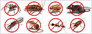 How could a Pest Management Firm help you?
