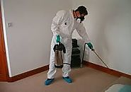 Benefits of Availing Pest Management Brisbane Services