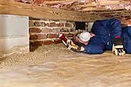 Pest Control Services to Get Rid of Dry Wood Termites