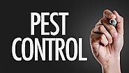 Tips for better pest control
