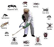 Explore the Best Pest Control Service with Advanced Technology