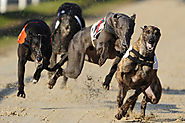 Greyhounds Racing: State of Online Betting