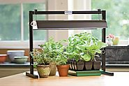HOW TO | GROW HERBS INDOORS