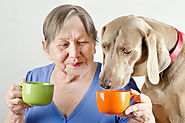 Is It Okay for the Elderly to Own Pets?