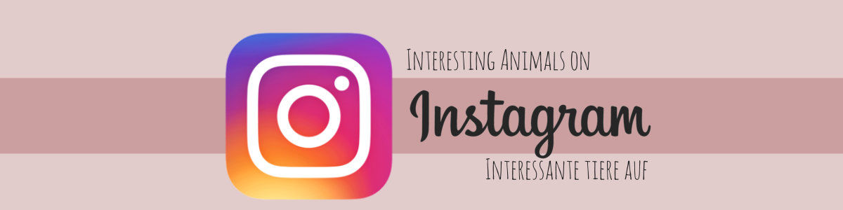 Headline for Interessante Tiere auf Instagram
