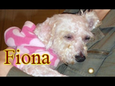 Fiona can see now!!! Please share her amazing follow-up video. Thanks :-)