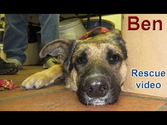 Dog rescue: Sweet Ben.