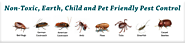 Pest Control Noida : Your Local Pest and Termite Control Expert in Noida, Indirapuram, Ghaziabad, Greater Noida.Call ...